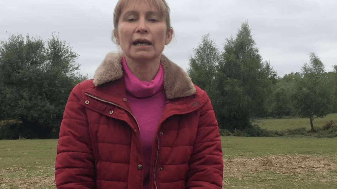 Green Party New Forest East - Alison Air Pollution